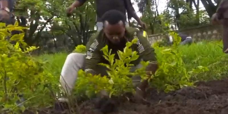 الحكومة الإثيوبية تغرس 350 مليون شجرة في يوم واحد
