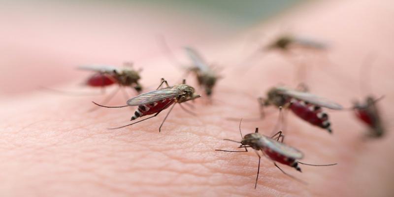 Les municipalités du Grand Tunis consacrent 1,6 MD pour lutter contre les insectes