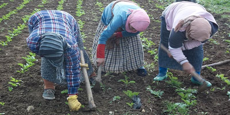 Zar : l'agriculteur tunisien devrait se suicider