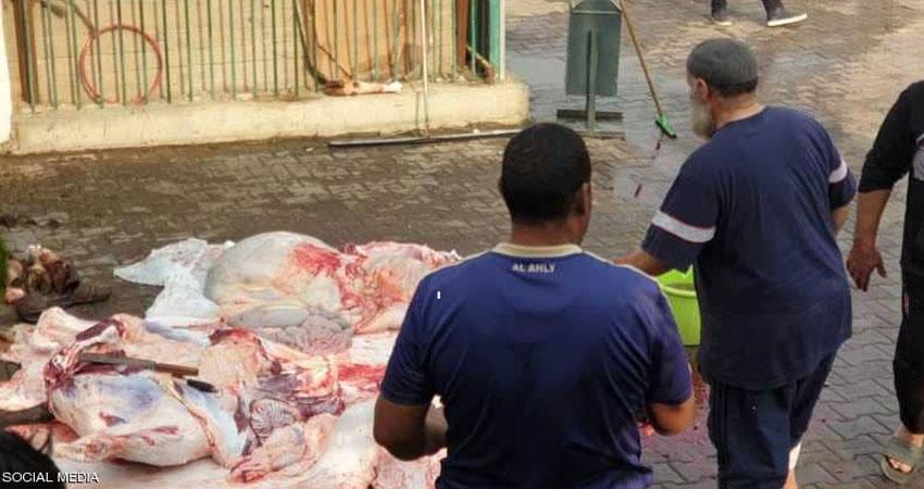 الأهلي المصري يلجأ إلى'العجل' لفك النحس