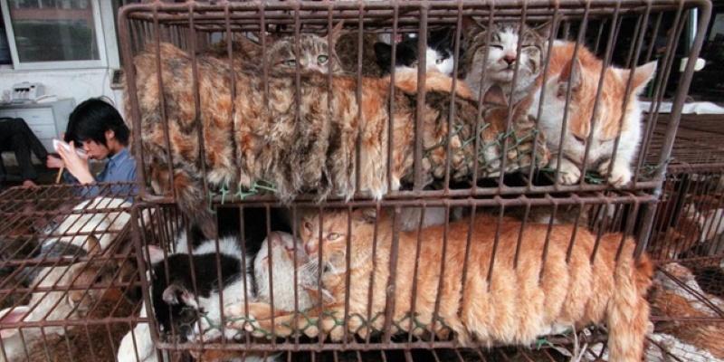 Certains marchés d'animaux sauvages auraient déjà rouvert en Chine