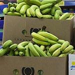 La mafia des bananes démasquée : Saisie de 60 tonnes de bananes destinées à la contrebande