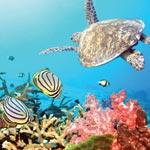 La biodiversité marine, thème de la Journée Internationale de la Biodiversité