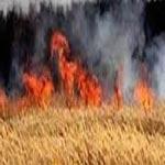 بنزرت: حريق يأتي على 10 هكتار من صابة الحبوب