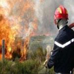 بنزرت: اندلاع حريق في 30 هكتارا من اشجار الصنوبر الحلبي