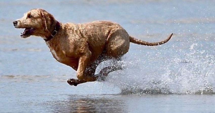 رئيس بلديّة رأس الجبل يُهدّدُ بتصفية أي حيوان على الشاطئ
