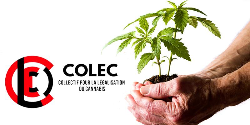 COLEC lance une pétition pour légaliser le cannabis