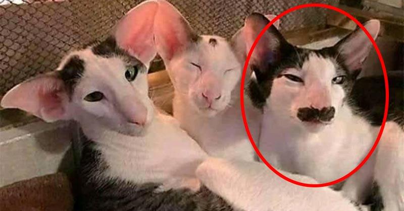 بالفيديو: الbbc تكشف حقيقة سي عبد الجليل القط الأشهر في تونس