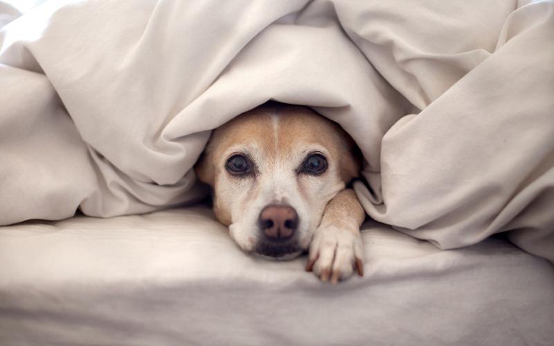 لهذه الأسباب: أبعد كلابك الأليفة عن فراشك