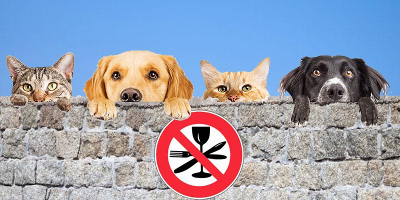 Il est désormais interdit de manger les chiens et les chats en Chine
