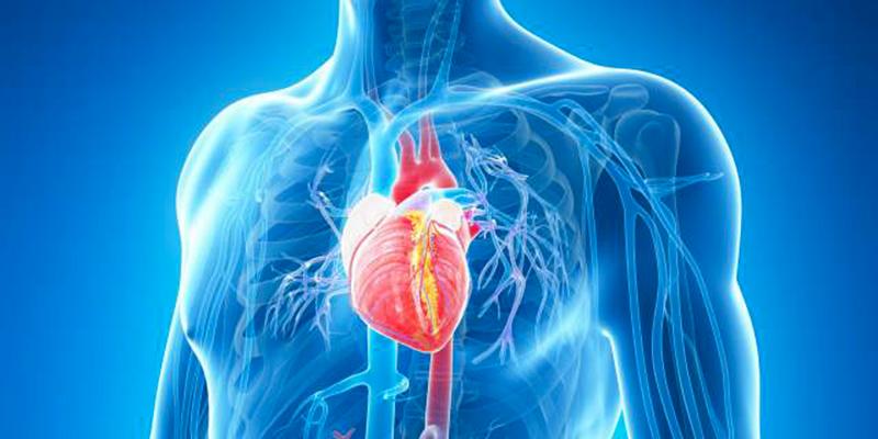 Un cœur transplanté est un cœur heureux