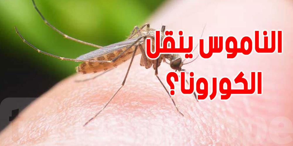 هل ينقل الناموس فيروس كورونا؟: وزارة الصحة توضح