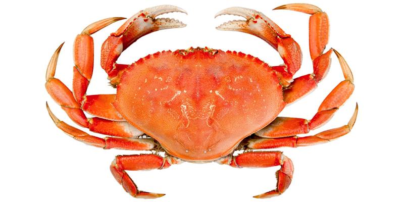 6,2 millions de dinars recette des exportations des crabes congelés
