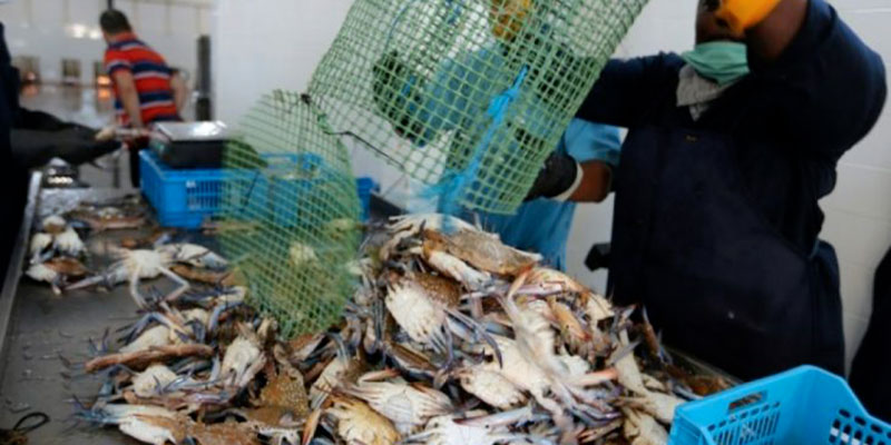Croissance des exportations des produits de pêche à la fin Novembre