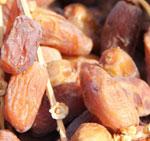 45 mille tonnes de dattes pour cette année