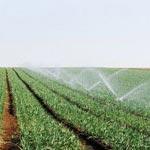 Une exonération de 30% des dettes des agriculteurs auprès de la STEG et de la CDRA