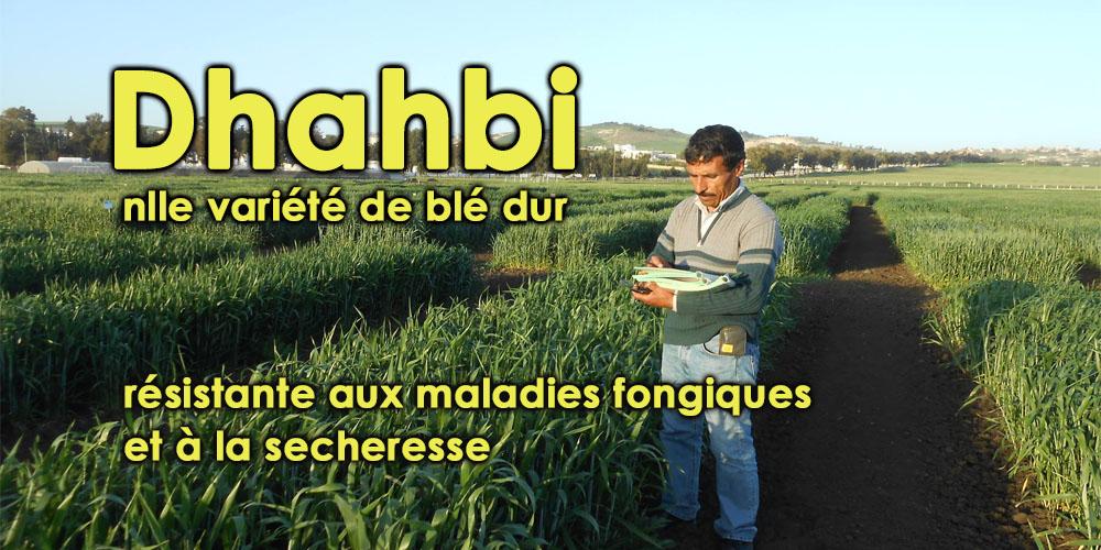 Un chercheur tunisien développe une nouvelle variété de blé dur