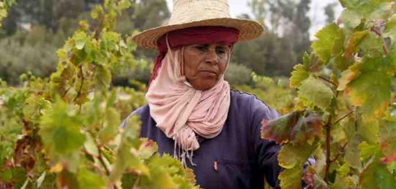 ''أحميني'' مشروع لتيسير انخراط العاملات في الوسط الريفي في منظومة الضمان الاجتماعي