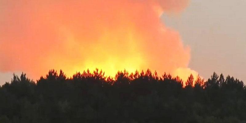 بنزرت: السيطرة على حريق أتى على 3 هكتارات من الغابة الشعراء بأولاد حسن بسجنان