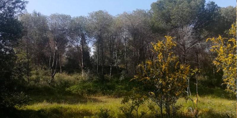 Le ministère de l'équipement renonce à la réalisation d'une route express à la forêt de Radès