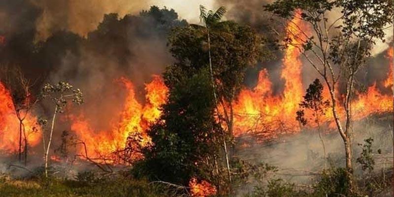 أستراليا: عواصف رعدية وأمطار تخفف حدة حرائق الغابات