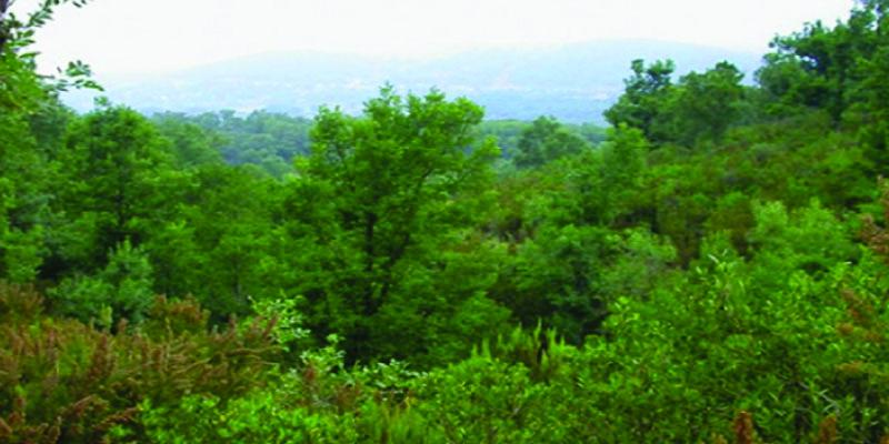 الكاف: الاعتداء على أعوان الغابات