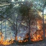 Pour le mois de juillet : Plus de 100 incendies enregistrés en Tunisie