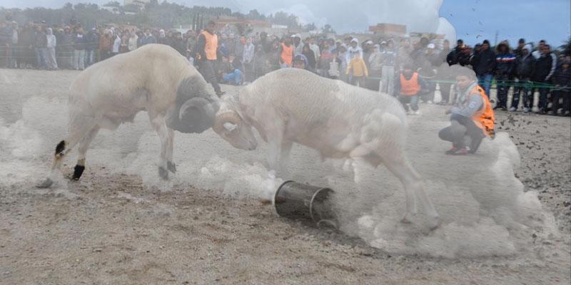 Du Gaz lacrymogène pour disperser un combat de mouton à Sousse