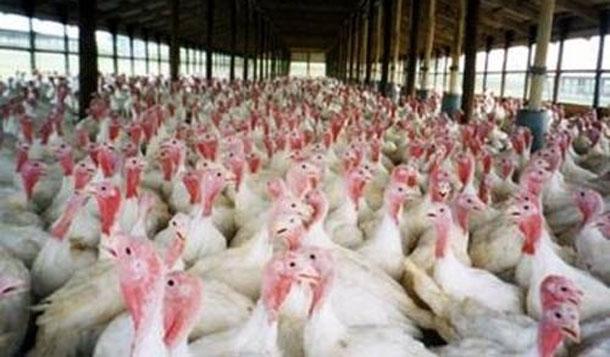 Aucun cas de grippe aviaire en Tunisie, assure le ministère de la Santé