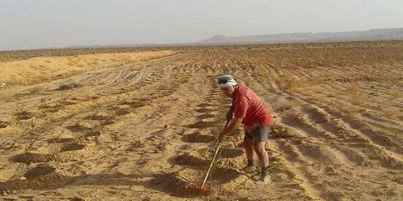 En photos : Hamadi Ben Yahia plante 10 mille arbres à Tataouine