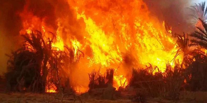 بنزرت: إخماد حريق جبل الناظور والنيران تأتي على 50 هك من الغابة