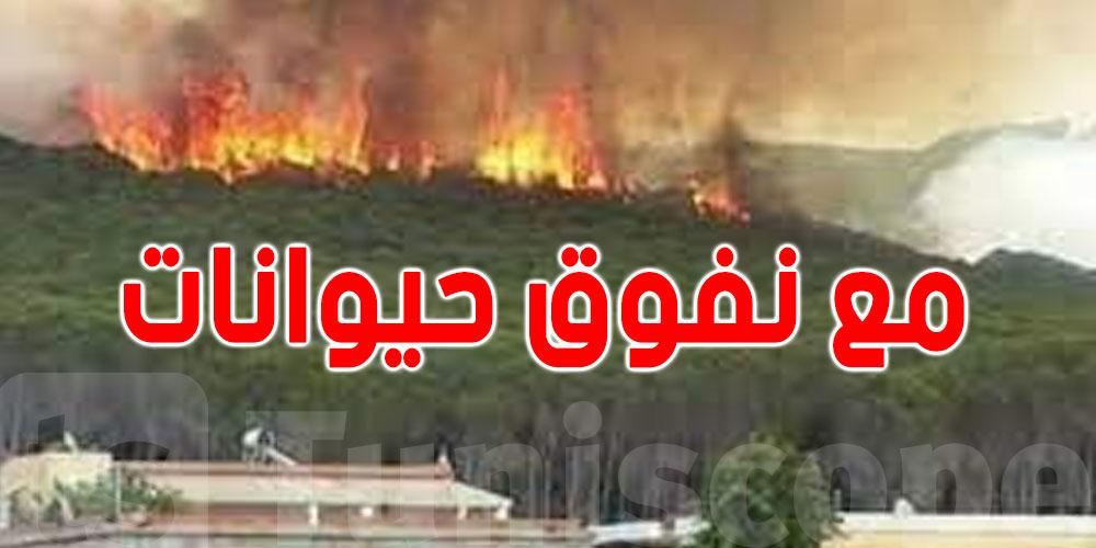 حرائق الكاف وجندوبة: إحتراق 12 منزلا