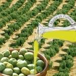 Deux huiles d'olive tunisiennes se distinguent au niveau international