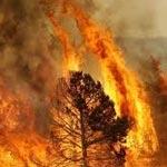 Ain Draham :Un incendie dans une forêt ravage 10 hectares de pin