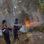 La forêt de Aïn Drahem ravagée par un incendie
