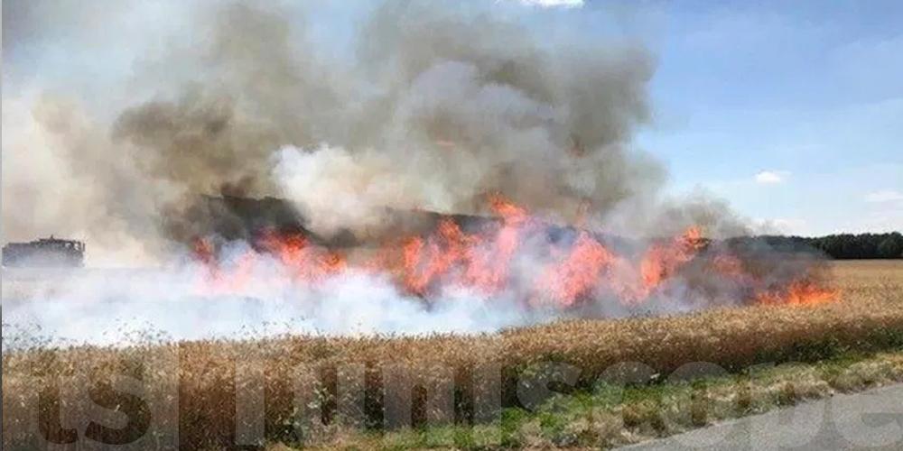 Tunisie : Plus de 50 hectares de céréales détruits