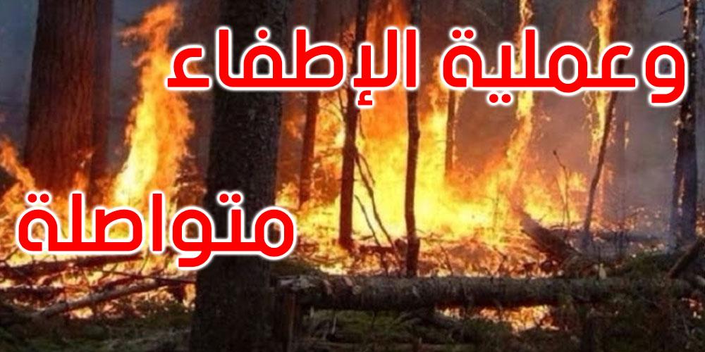 بنزرت: نشوب حريق في جبل الناظور بغار الملح