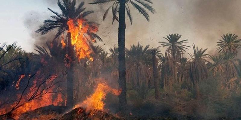 4 incendies maîtrisés dans la palmeraie de Kebili