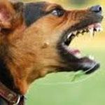 Borj Cedria déclarée zone envahie par la rage suite à la détection d'une personne contaminée