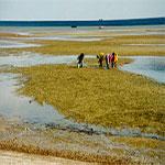 Festival environnemental aux îles El-Kneiss du 15 au 17 juin
