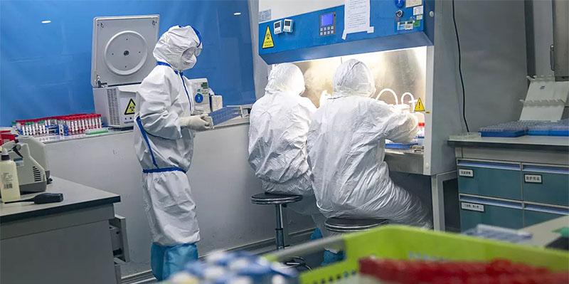 Des scientifiques chinois confirment que le coronavirus provient de la chauve-souris