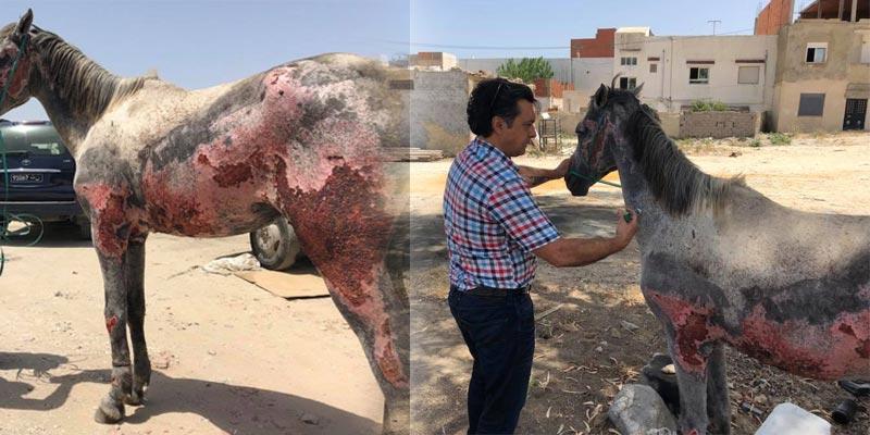 بالصور: بلدية حلق الوادي تصدر توضيحا بخصوص الحصان ''المحروق''