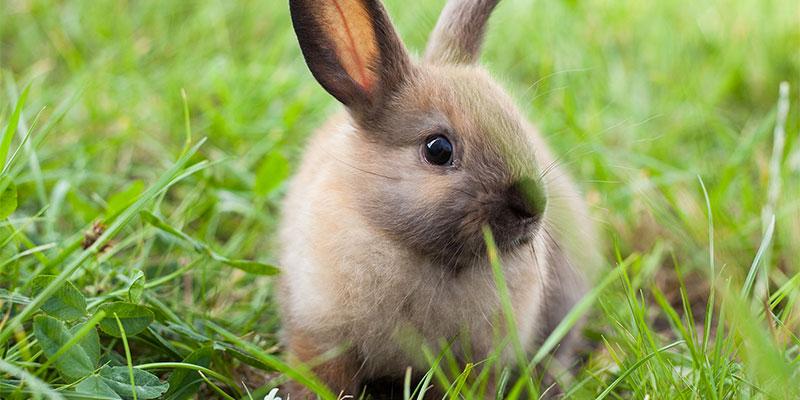 تحذير طبي من طعام الأرانب الشائع.. ''له تأثير المخدرات ''