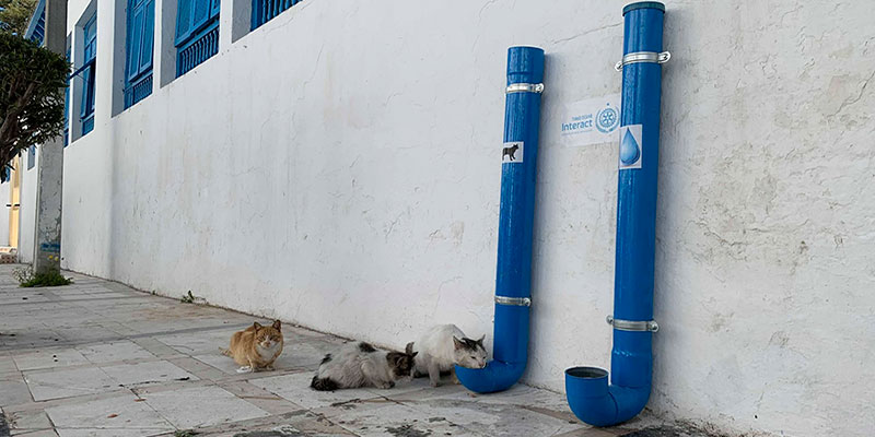 Nouveauté : De la Nourriture pour animaux en Self Service à Tunis