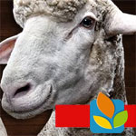 Réservez aujourd'hui et demain un demi-mouton à 20,9 dt/kg