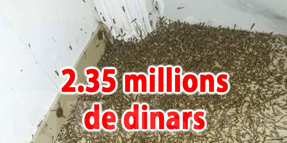 2.35 millions de dinars pour lutter contre les insectes