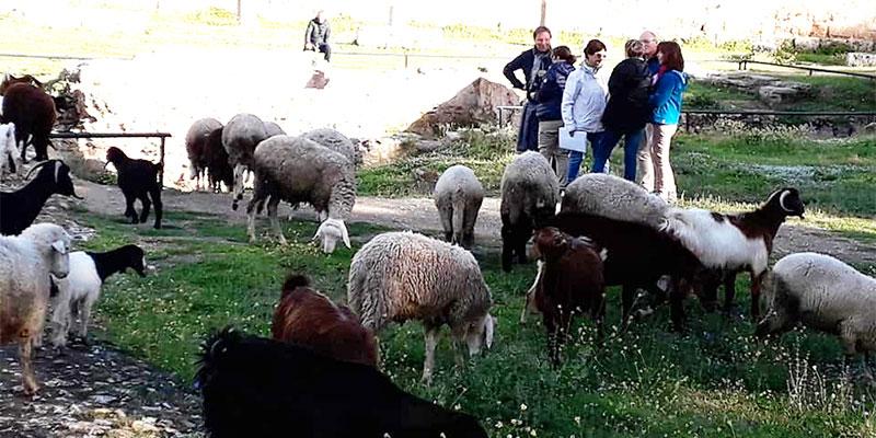 Photo du jour : Les Moutons de Carthage
