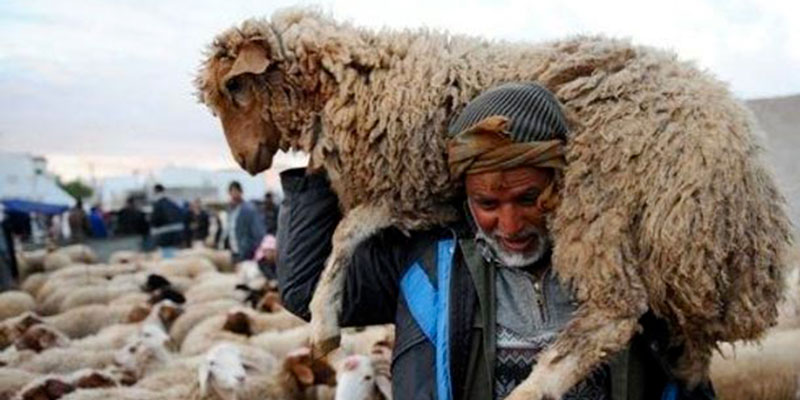 Le secteur de l'élevage peut disparaitre en Tunisie