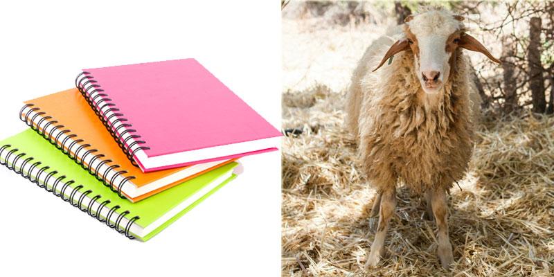 Des cahiers au lieu des moutons…