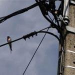 Un oiseau provoque une coupure d'électricité à Ksour Essef